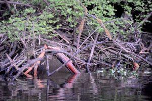 beaver den on kathleen lake vancouver island camping