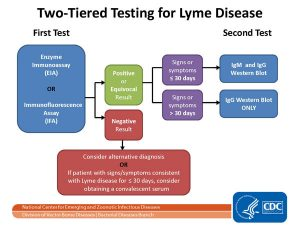 two tiered testing for ticks carrying lyme disease